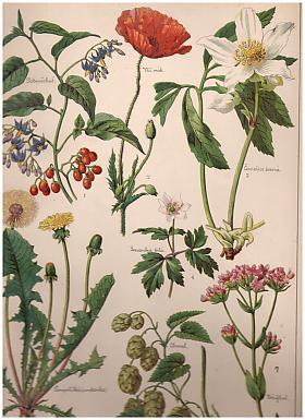Storchův přírodopis v obrazích: rostlinstvo a nerostectvo ve 270 vyobrazeních k názornému vyučování