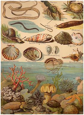 Storchův přírodopis v obrazích: živočišstvo ve 250 vyobrazeních k názornému vyučování